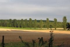 Pappelreihe bei Heimersheim (Photo: Chr. Donnerstag)