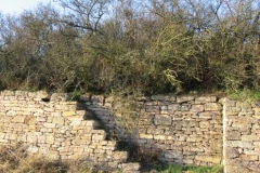 Trockenmauer bei Siefersheim (Photo: Chr. Donnerstag)