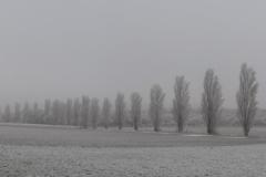 Pappelreihe bei Heimersheim im Dezember (Photo: Chr. Donnerstag)